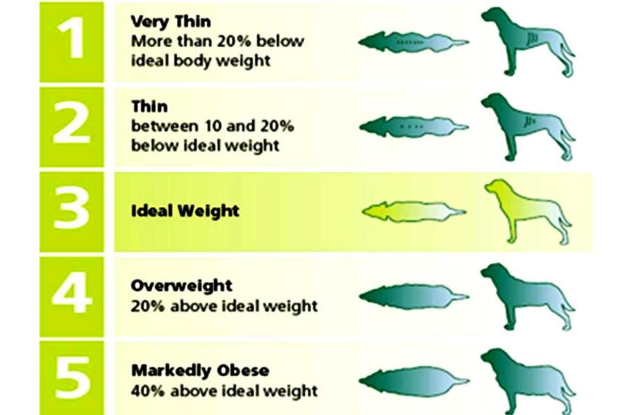Dog weight comparison chart. Image Credit: Ottawa Valley Dog Whisperer