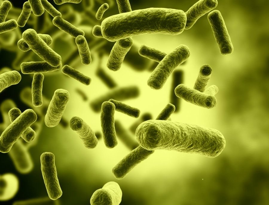 Scientists encode old racehorse movie into live E. coli DNA. Image credit: Weesblog / Theodysseyonline.com