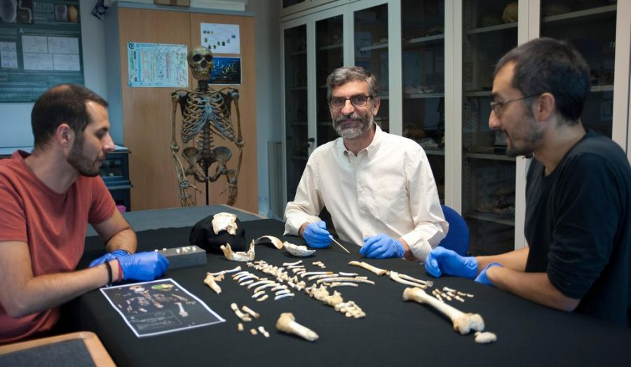 Researchers examine Neanderthal boy's bones. Image credit: CSIC Communication