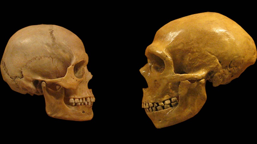 Humans Today Have Even More Neanderthal DNA Than We Realized