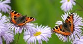 Flying insects Germany, Insect population decline