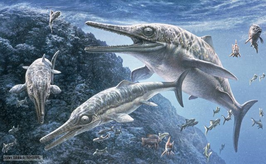 Ichthyosaur, Ichthyosaur in India, Ichthyosaur fossil