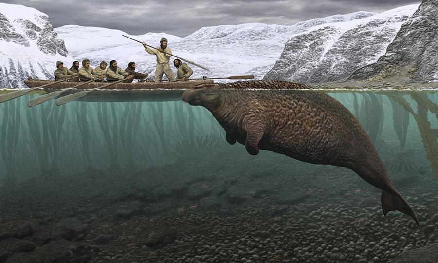 Sea cow, Steller's sea cow, Sea mammal in Russia