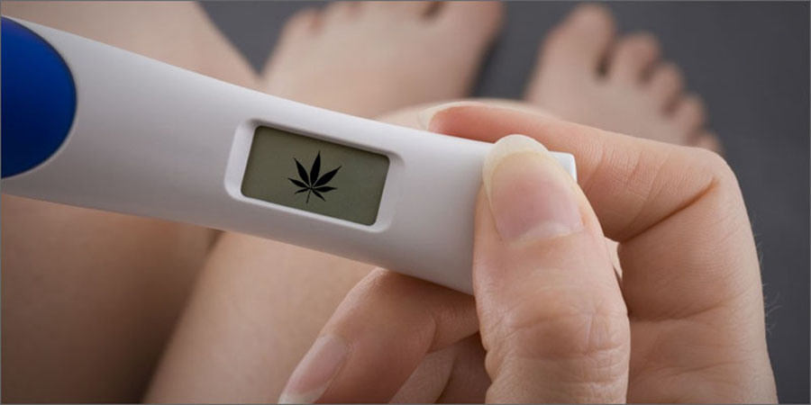 More pregnant women are smoking marijuana for morning sickness
