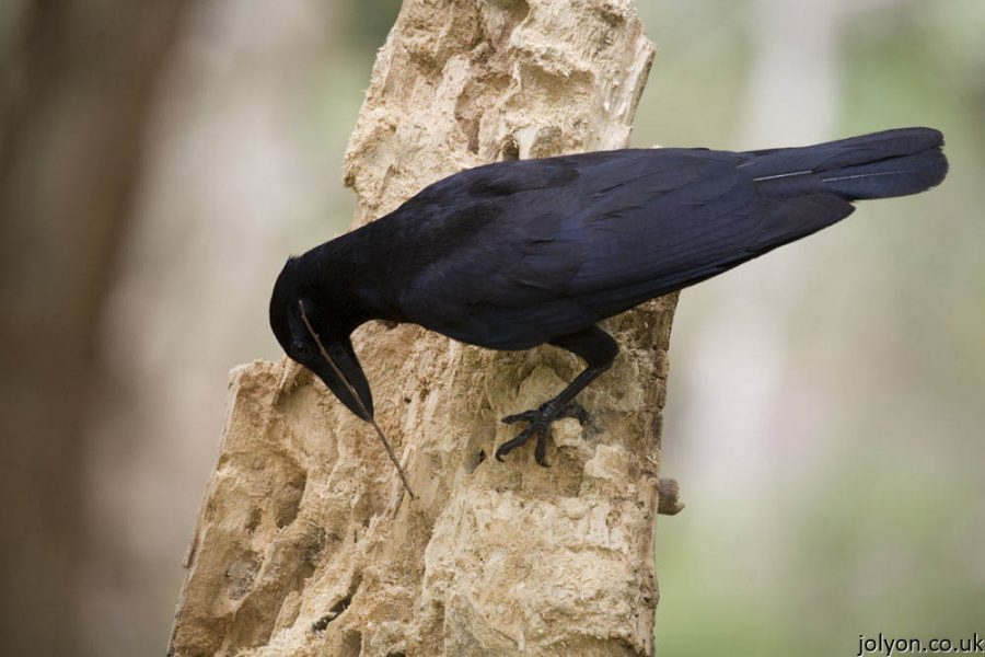 how to stop crows eating bird food