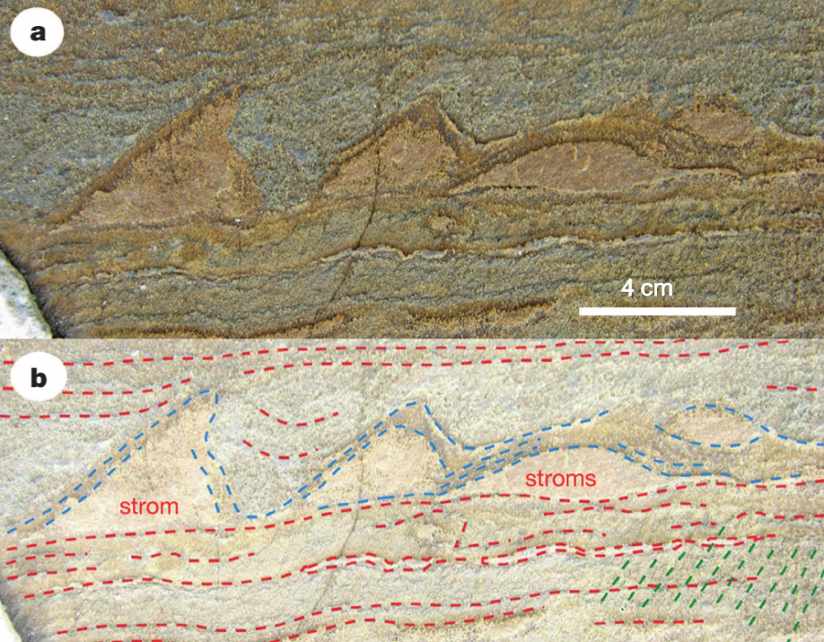 greenland, fossils, rocks
