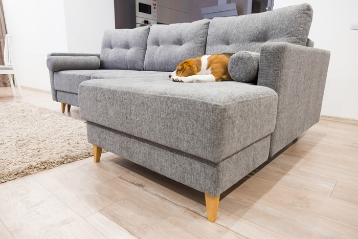 Dog Sleeping on Furniture
